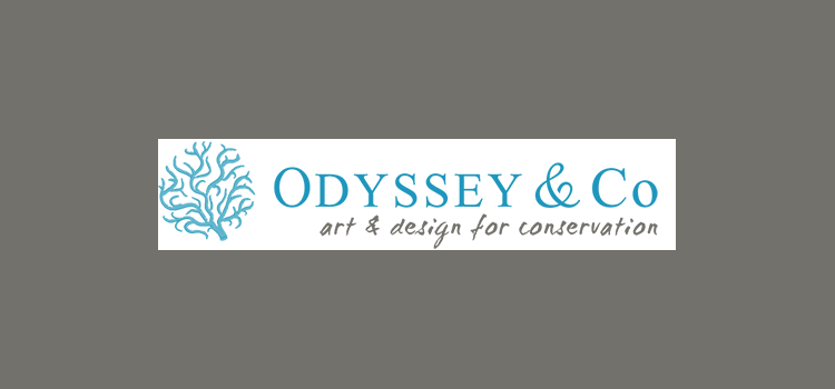 ODYSSEY & Co Collection